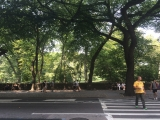 <h5>Entering Central Park at 72nd Street</h5>